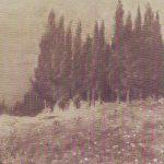 Paesaggio con Cipressi a Uopini carboncino su carta